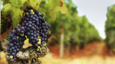 Treasury Wine Estates says it is expecting to buy French wine assets this half.
