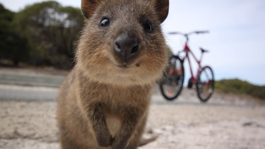 Rottnest Island is set to reopen to visitors.