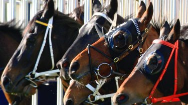 Wagga is the venue for Monday's feature NSW meeting.