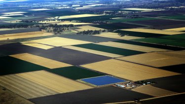 Broadacre cropland, such as on the Liverpool Plains of NSW, has removed crucial habitat for insects and other animals.