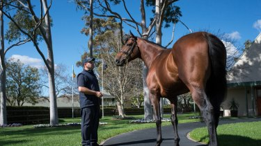 Bright start: American Pharoah shuttled to Australia for the first time last year and covered 158 mares.