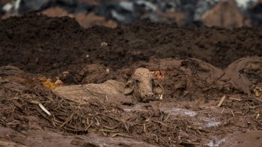 The Brumadinho dam collapse in Brazil killed 300 people and caused widespread destruction.