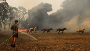 Horses run away from the flames as a resident defends their property near Orangeville.