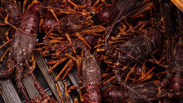 Chinese bans on Australian lobsters have hurt Portland's economy.