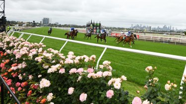Flemington's famous roses next to the track on Derby Day.