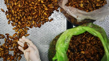Insects are eaten in many parts of the world, but western countries are still getting used to the idea.