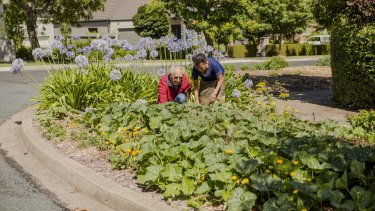 Canberrans Jim Laity and Chanla Khanthavongsa, who have grown vegetables on their nature strip for 10 years, with government approval.