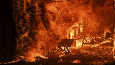 Bushfires burnt through 5.4 million hectares in NSW.