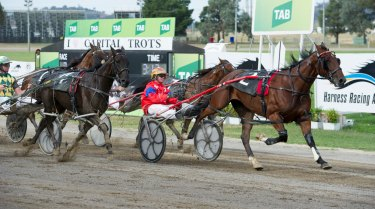Canberra Harness Racing Club will host one of its strongest meetings ever on Sunday.