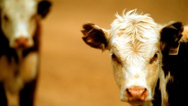 Feeding cows lemongrass will reduce daily methane emissions, Burger King says.