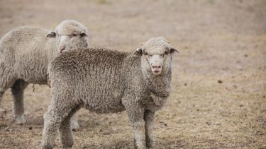 Drought and lower wool trading volumes have hit the results of listed agribusiness Elders.