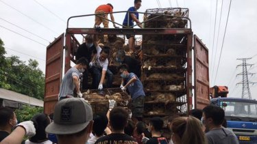 More than 100 Chinese activists rescue dogs and cats from a truck headed to slaughterhouses in Guangzhou on the eve of China's annual Yulin dog meat festival in 2017.