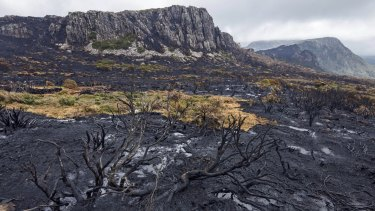 Unprecedented bushfires in 2016 torched Tasmania's World Heritage area and killed species which were not adapted to fire, including pencil and king billy pines and cushion plants.