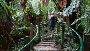 The 1000 Steps in the Dandenongs.