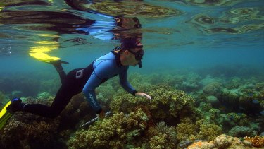 The Great Barrier Reef's Marine Park Authority climate change scientists inspect the reef near Lizard Island.