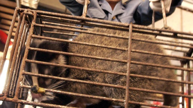 A civet cat at a wildlife market in Guangzhou, China.