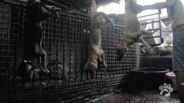 An expose revealed dogs being strung upside down in slaughterhouses in Surakarta.
