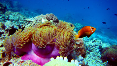 """Global experts are backing UNESCO's draft """"in danger"""" rating for the Great Barrier Reef."""
