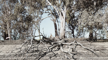 The severe drought affecting the Murray Darling Basin is making the finalisation of important river management plans difficult, the NSW government says.