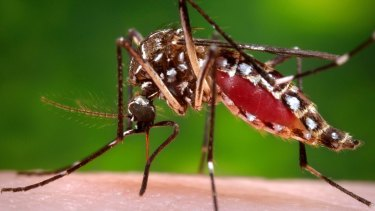 """""""Nuisance"""" levels of mosquitoes have prompted the Sydney Olympic Park Authority to start its annual spraying program to reduce the area's population."""