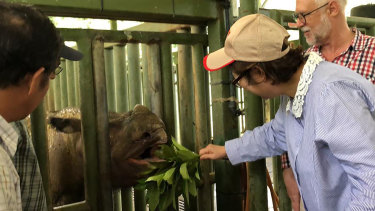 Iman, a 25-year-old female Sumatran rhino, died at a sanctuary in Borneo on Saturday. Her death marks the extinction of the species in its native Malaysia.