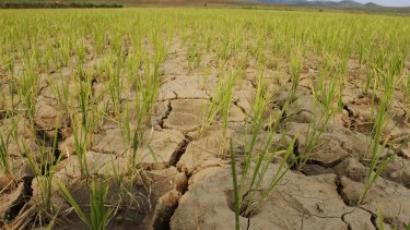 North Korea suffered from a crippling drought in 2012.