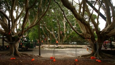 Sydney needs more trees, not less.