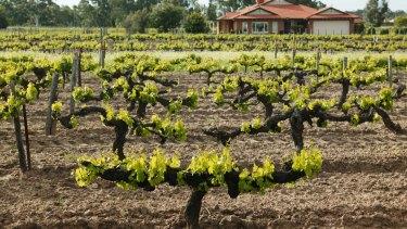 WA wineries are reliant on cellar door sales.