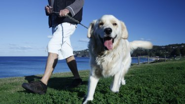 Golden retrievers were one the most popular breed list. Unsurprisingly.