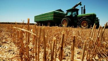 Lower wheat production will reduce Australia's wheat export capacity.