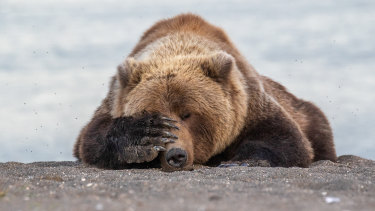 Bears hibernate, but economies and businesses are not built to do so.