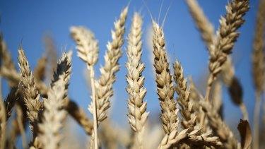 Nufarm said dry weather in Australia had reduced demand for crop protection products.