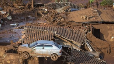 A car and two dogs are seen on the roof of destroyed houses in the small town of Bento Rodrigues after the Samarco dam collapse.