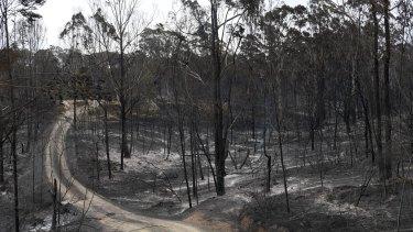 The burnt landscape in Sarsfield, East Gippsland, in December.
