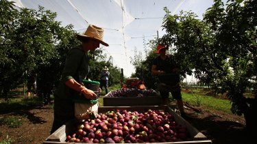 Fruit and vegetable growers are warning of price rises because of labour shortages.