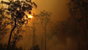 25 million trees will be planted after last summer's bushfire disaster.