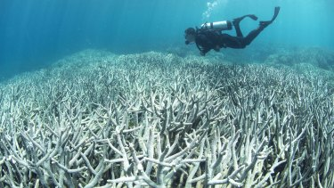 Bleaching along the Great Barrier Reef is a common sight for divers.