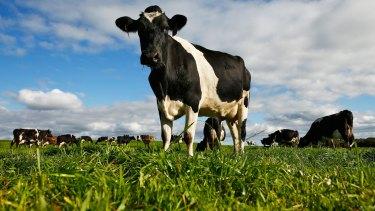 Former dairy processor Murray Goulburn has settled a class action.