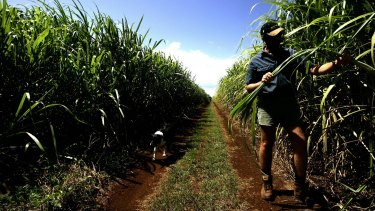 Global sugar prices are soaring.