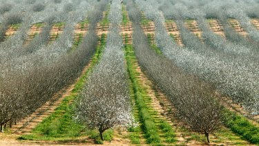 Almond producer Select Harvests has delivered a 120% profit hike.