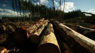 The investors put money into forestry schemes.