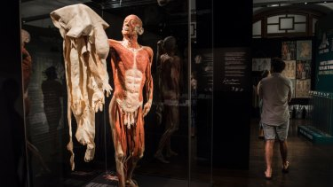 A full body specimen at Body Worlds Vital holds up its own skin.