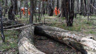 Karen Ristevski's remains were found between two logs in bushland at Mount Macedon.