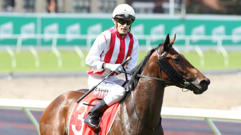 Slot secured: John Messara-owned Shoals will run in The Star's slot in October's $13 million The Everest