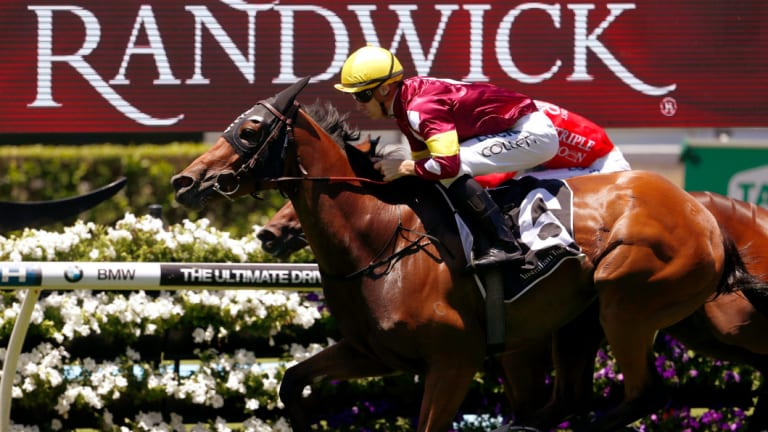 Autumn awaits: Aqua D'Ivina will stretch out to 1800 metres  at Randwick on Saturday.