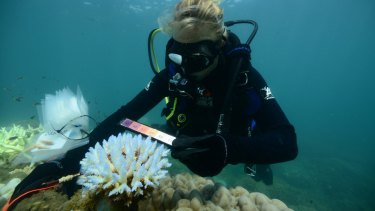 How long has the Great Barrier Reef got?: An AIMS researcher surveying thermal stress and bleaching at Taylor Reef off Mission Beach.
