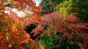 Victoria in autumn.