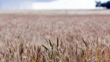 Crop yields are down from September predictions.