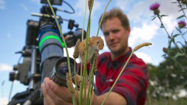 While working on Planet Earth II, cameraman Jonathan Jones focuses his lens on a harvest mouse climbing grass stems in a  meadow in Norfolk.
