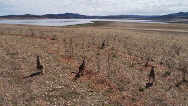 Drought is crippling large parts of NSW. Lake Burrendong near Wellington, currently sits at just 4.4% capacity.